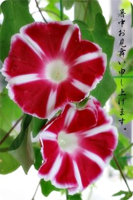 e0200312_201139.jpg