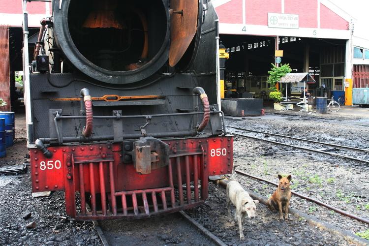 バンコク  トンブリー(バンコクノイ)駅のイヌ好き青年_b0061717_5421871.jpg