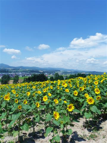 北海道自助旅行 (中)_d0187917_23481656.jpg