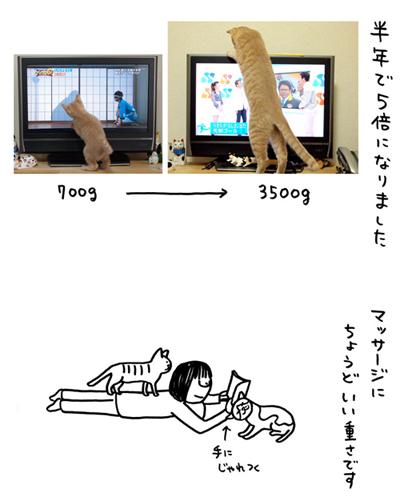 「biwamap」の坂木浩子さん登場!_c0039735_205475.jpg