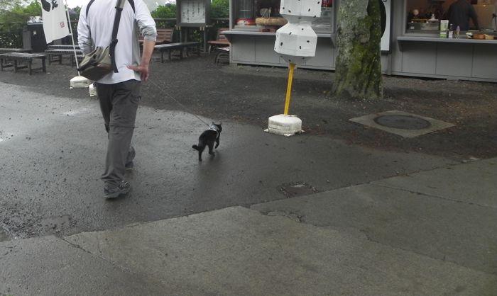 「猫に引かれて薬王院」_a0037338_2293610.jpg