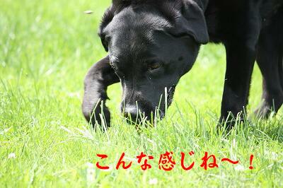 f0146769_0375011.jpg