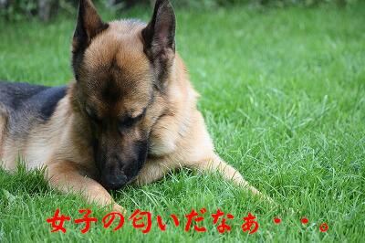 f0146769_038660.jpg