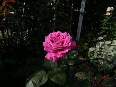 c0078586_1602558.jpg