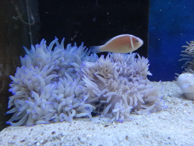 海水魚・サンゴ・水草・淡水魚_f0189122_13104353.jpg