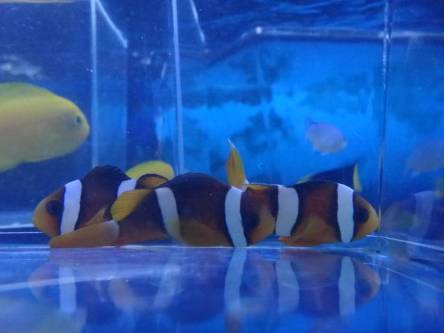 海水魚・サンゴ・水草・淡水魚_f0189122_1362785.jpg