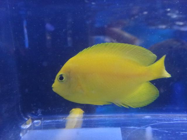 海水魚・サンゴ・水草・淡水魚_f0189122_1373517.jpg