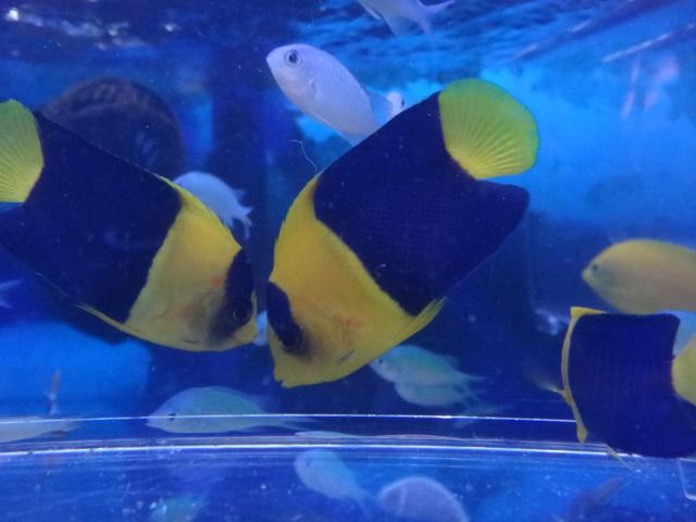 海水魚・サンゴ・水草・淡水魚_f0189122_1385346.jpg