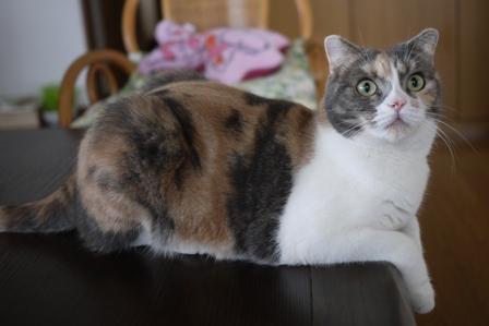 猫の友だち マミちゃん編。_a0143140_0465375.jpg