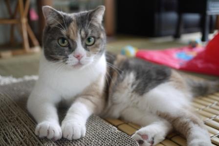 猫の友だち マミちゃん編。_a0143140_0484115.jpg