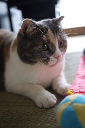 猫の友だち マミちゃん編。_a0143140_0495491.jpg
