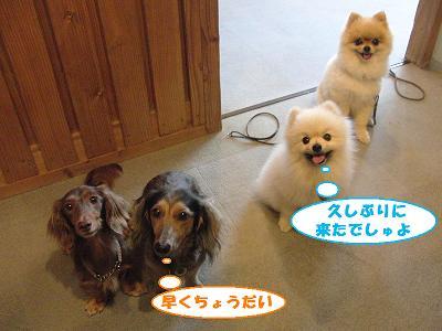 f0186040_20103611.jpg