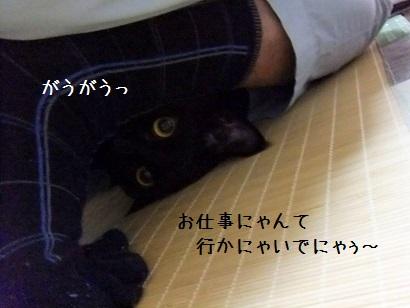 b0118850_954324.jpg