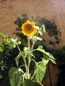 夏の庭_a0155362_23523387.jpg