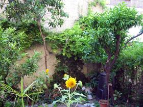 夏の庭_a0155362_2353481.jpg