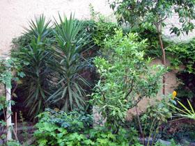 夏の庭_a0155362_2355126.jpg