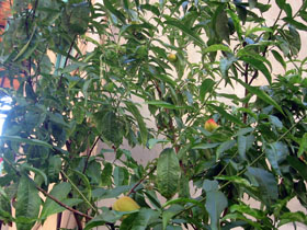 夏の庭_a0155362_23561357.jpg