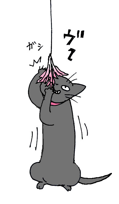 仔猫里親募集中 らんまちゃん_a0064067_122257.jpg