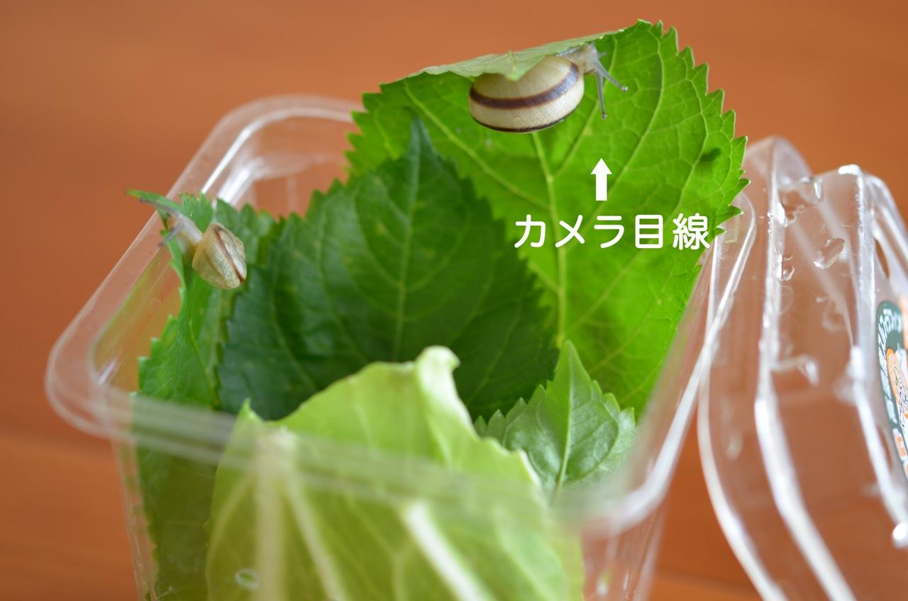 b0136669_19305559.jpg
