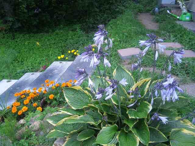 花咲く 夏_e0186499_17352042.jpg