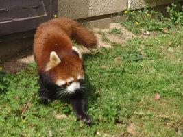愛媛県 とべ動物園_e0176128_12421237.jpg