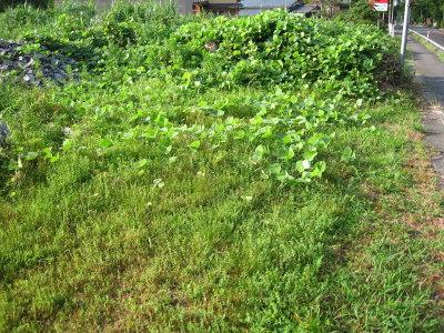 雨降ると草がすごい_f0182936_23433993.jpg