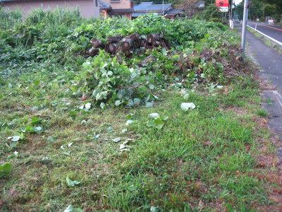 雨降ると草がすごい_f0182936_23452038.jpg