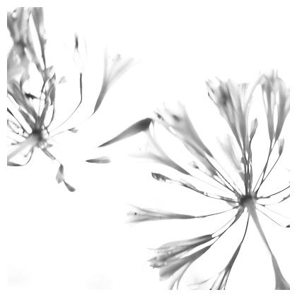 b0148858_20125691.jpg