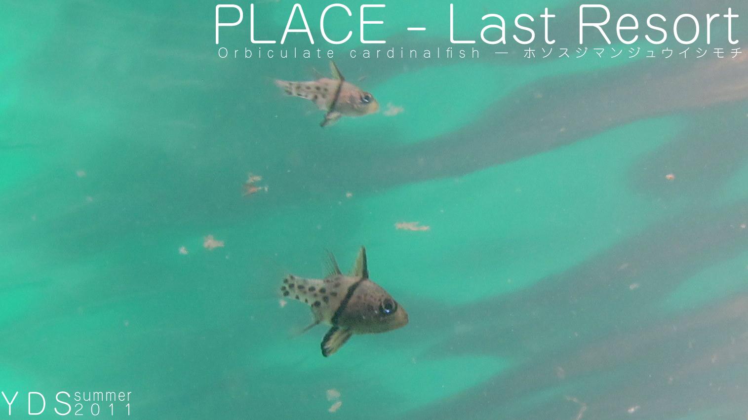 8月4日ノ弐,―Last Resort―_d0113459_1733812.jpg