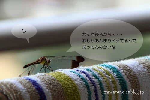 f0113163_211423.jpg