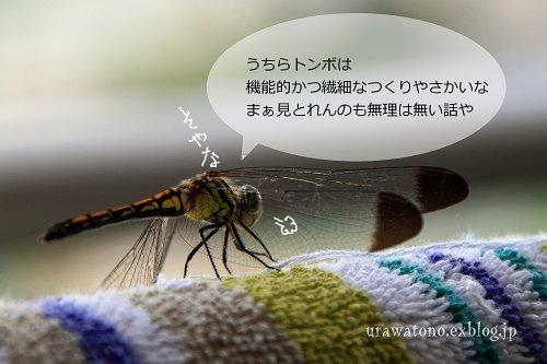 f0113163_2114251.jpg