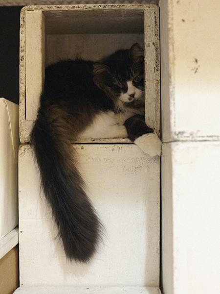 箱猫_a0002672_1522796.jpg