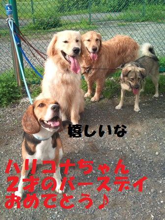 f0230380_16411836.jpg