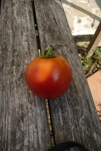トマト!トマト!トマト!_f0106597_0391495.jpg