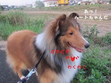 d0180602_18193698.jpg
