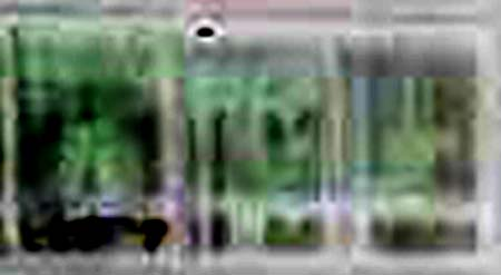 e0103408_1538495.jpg
