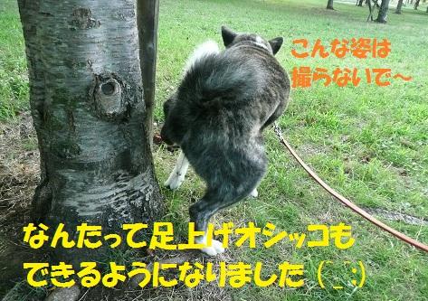 f0121712_16141632.jpg