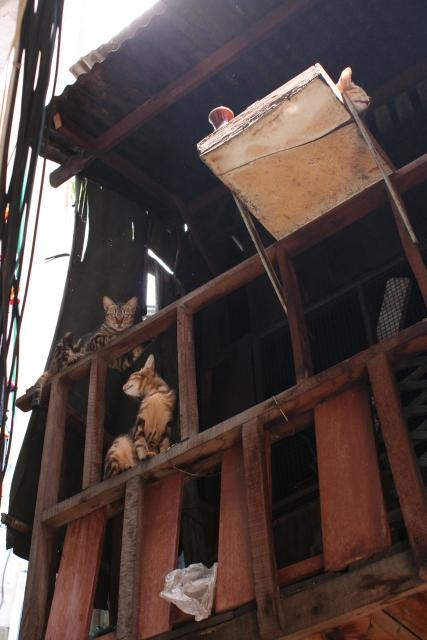 ホーチミン  裏通りのネコたち_b0061717_4243849.jpg