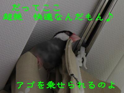 b0158061_20375999.jpg