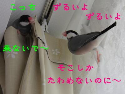 b0158061_2038926.jpg