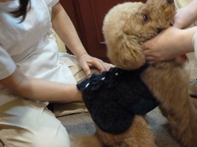 2011.8.5  今日は楽しい整体治療の日_a0083571_23323474.jpg