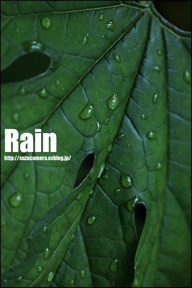 雨の多い一週間_f0100215_20375078.jpg