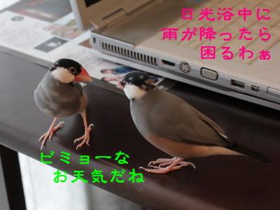 b0158061_20345523.jpg
