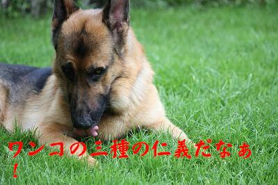 f0146769_20104048.jpg