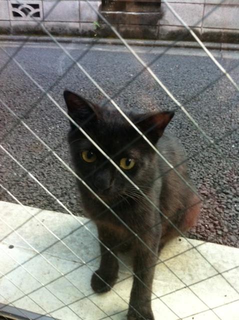黒猫_b0206085_1648346.jpg