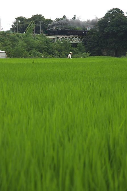 夏の鉄橋 - 2011年盛夏・信越線 -_b0190710_22421627.jpg