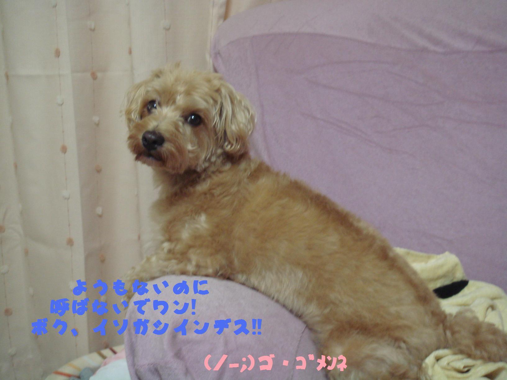 b0199912_2424324.jpg