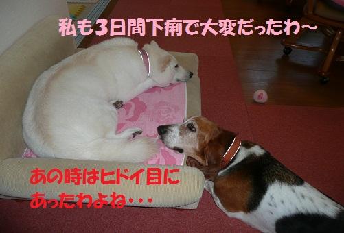 f0121712_21352677.jpg