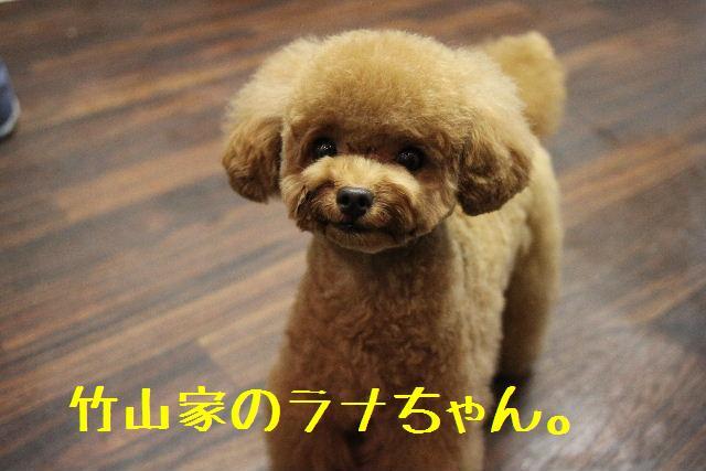 b0130018_9104798.jpg