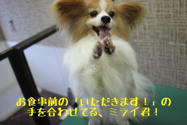 b0130018_9225725.jpg